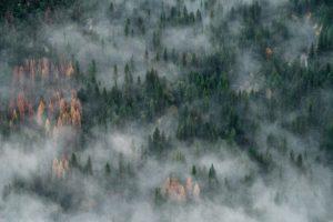 lasy naturalna fabryka tlenu